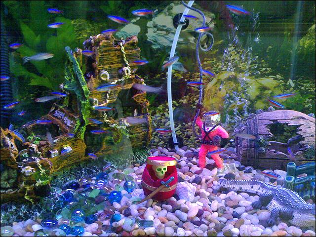 buy fish tanks in Racine, WI